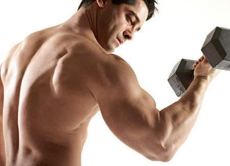 muskuli11