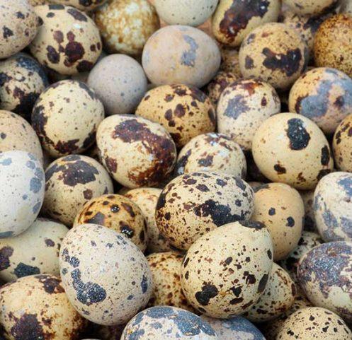 jajca-prepelica1